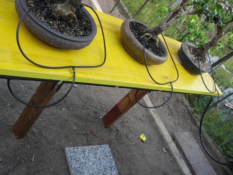 Dove coltiviamo i nostri bonsai - Pagina 3 Img_2115