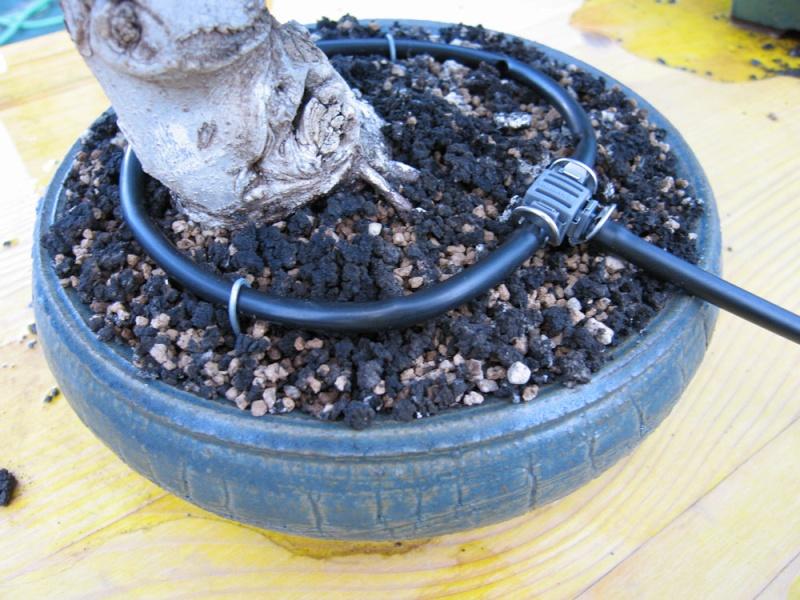 Irrigazione Img_2315