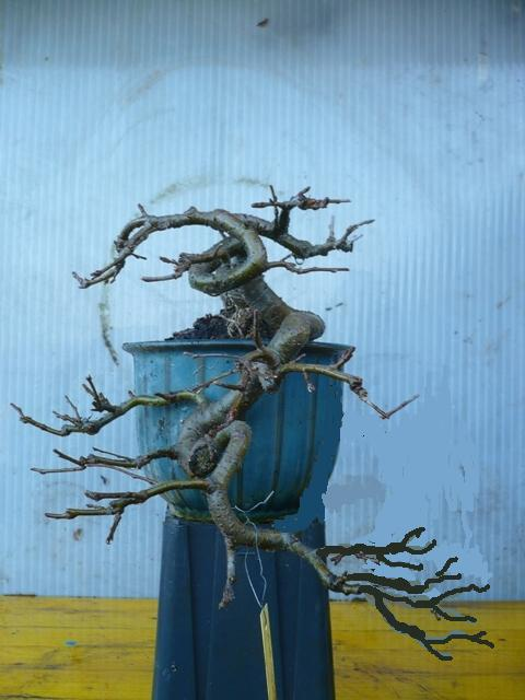 melo a cascata - Melo da seme in cascata. P1050310