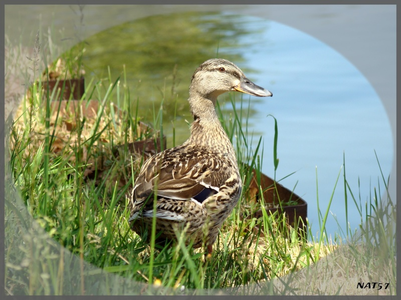 Concours photo du mois de mai 2011. Thème : En avril, ne te découvre pas d'un fil, en mai fait ce qu'il te plait... Mai_2011