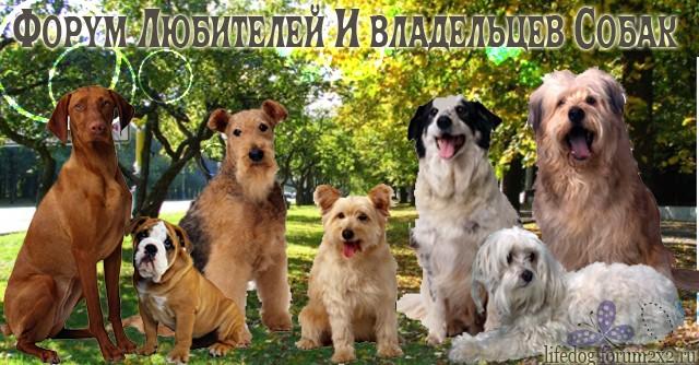 Форум Любителей и Владельцев Собак