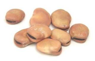 Présentation et Préparation des graines Appats10