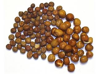 Présentation et Préparation des graines Pois-e10