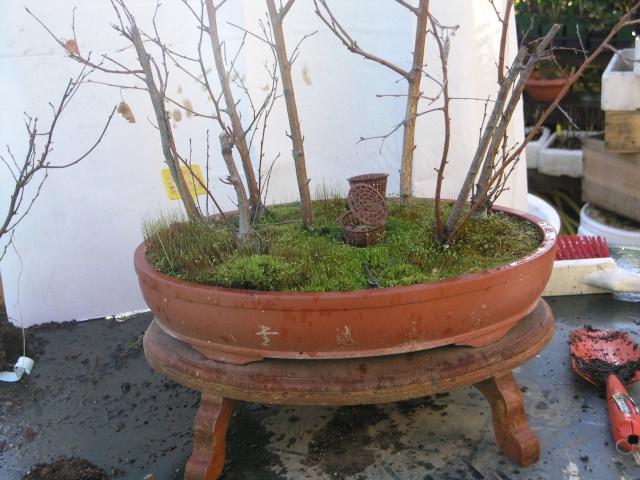 changement d'un arbre mort sur une petite foret de bouleau P2274210
