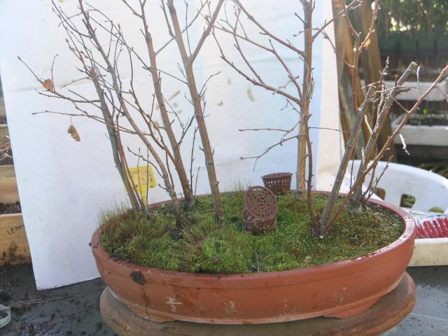 changement d'un arbre mort sur une petite foret de bouleau P2274214