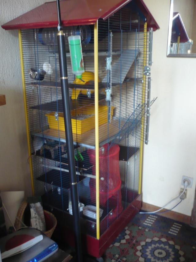 2 cages à vendre(belgique) P1080212