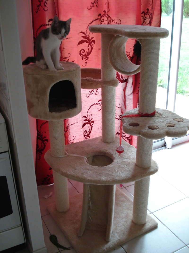 Les jouets de nos chats Dsc02110