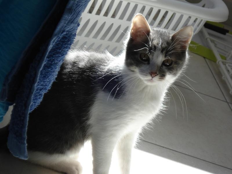 Spécials Photos : Avant/Après de nos chats - Page 3 Dsc02221