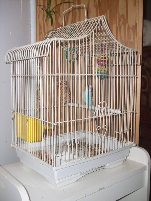 Cage ??? Dscf2310