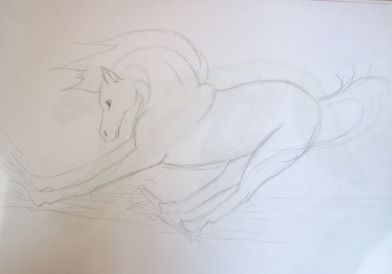Horse Sketches Img_0013