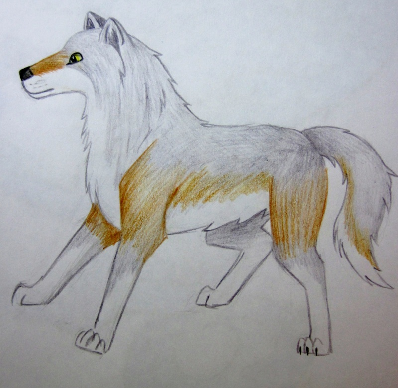 Wolf Sketches Img_0014