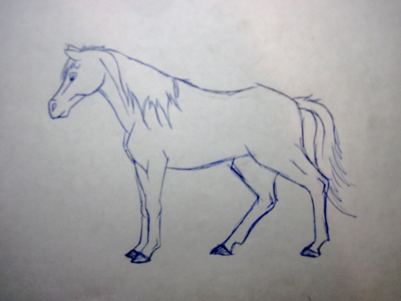 Horse Sketches Img_0210