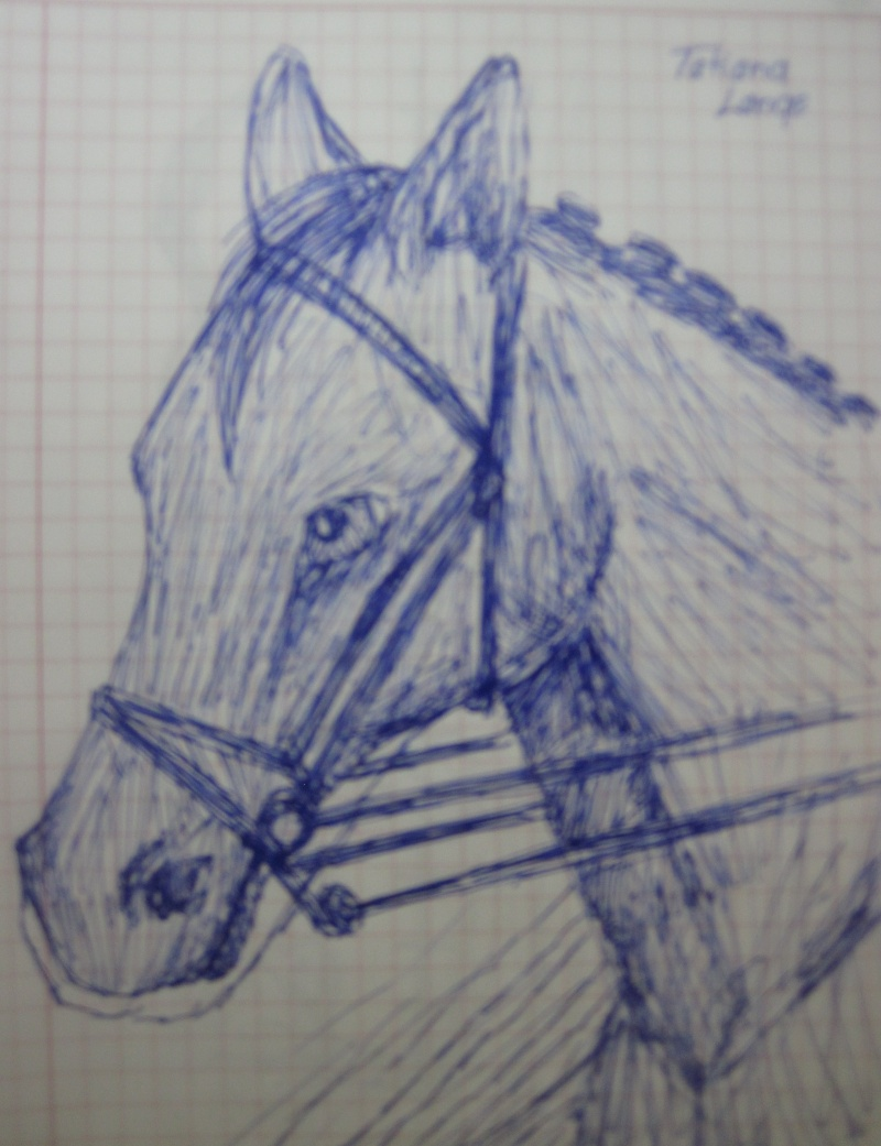 Horse Sketches Img_0211