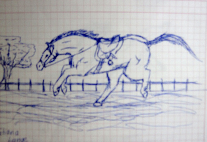 Horse Sketches Img_0213