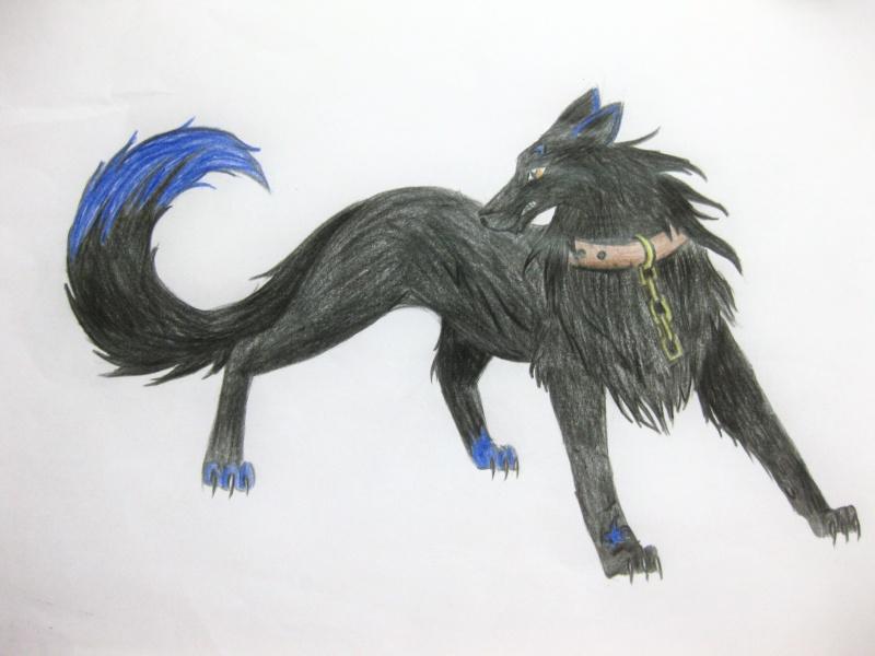 Dark Wolf Img_0711