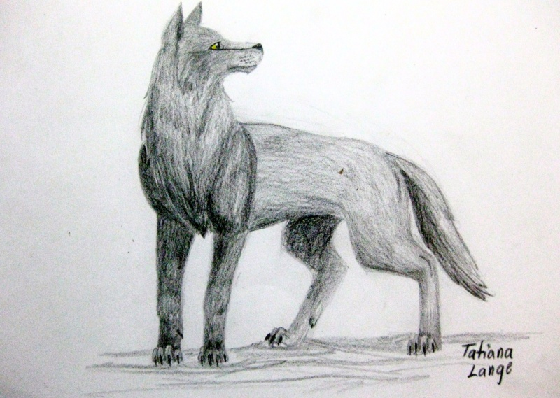 Wolf Sketches Img_0810