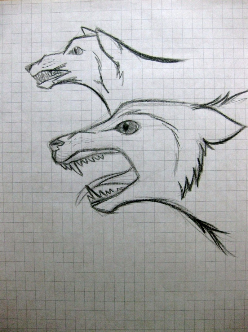 Wolf Sketches Img_1514