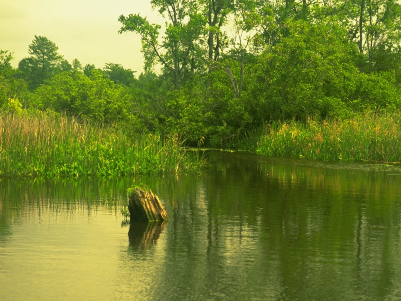 The Big Marsh Pantan10
