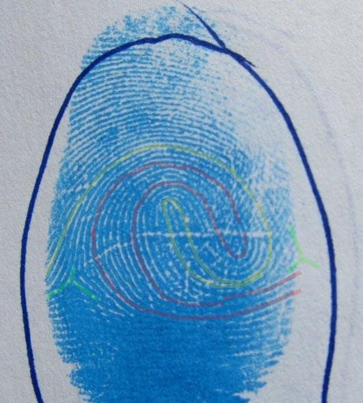 Composites (= 'double loop' fingerprints) - Page 2 Boaz-f10