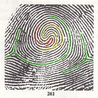 Composites (= 'double loop' fingerprints) - Page 2 Fbi_2610