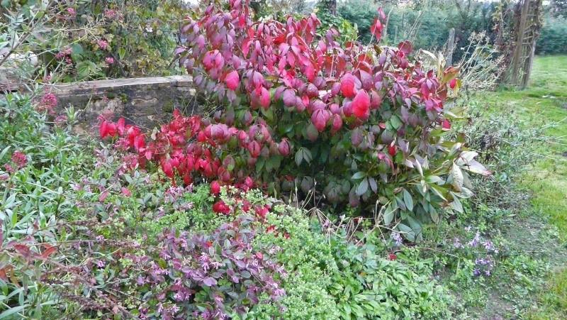 A qui appartiennent ces belles couleurs d'automne? P1170110