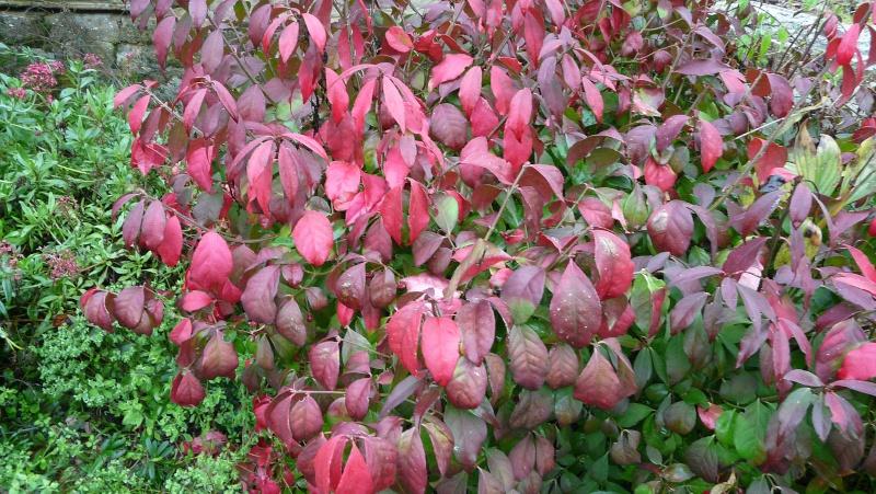 A qui appartiennent ces belles couleurs d'automne? P1170112