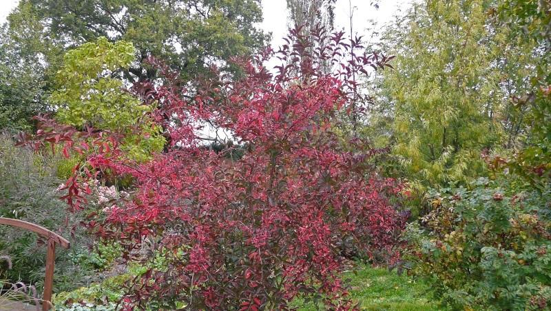 A qui appartiennent ces belles couleurs d'automne? P1170211