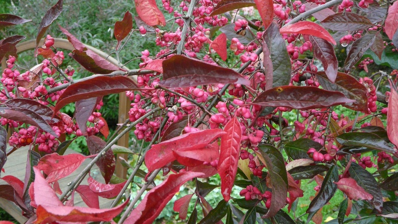 A qui appartiennent ces belles couleurs d'automne? P1170310