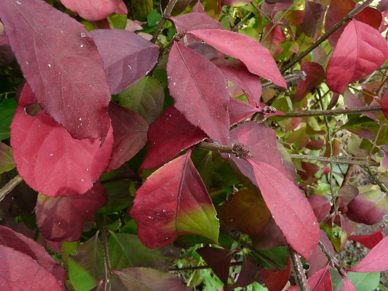 A qui appartiennent ces belles couleurs d'automne? P1170311