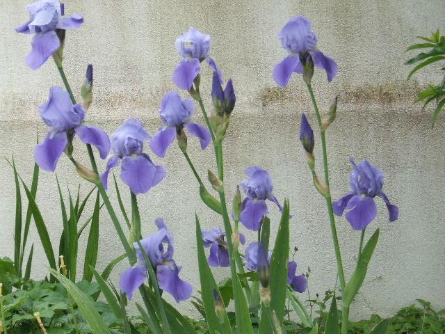 Iris.... - Page 2 2011_017