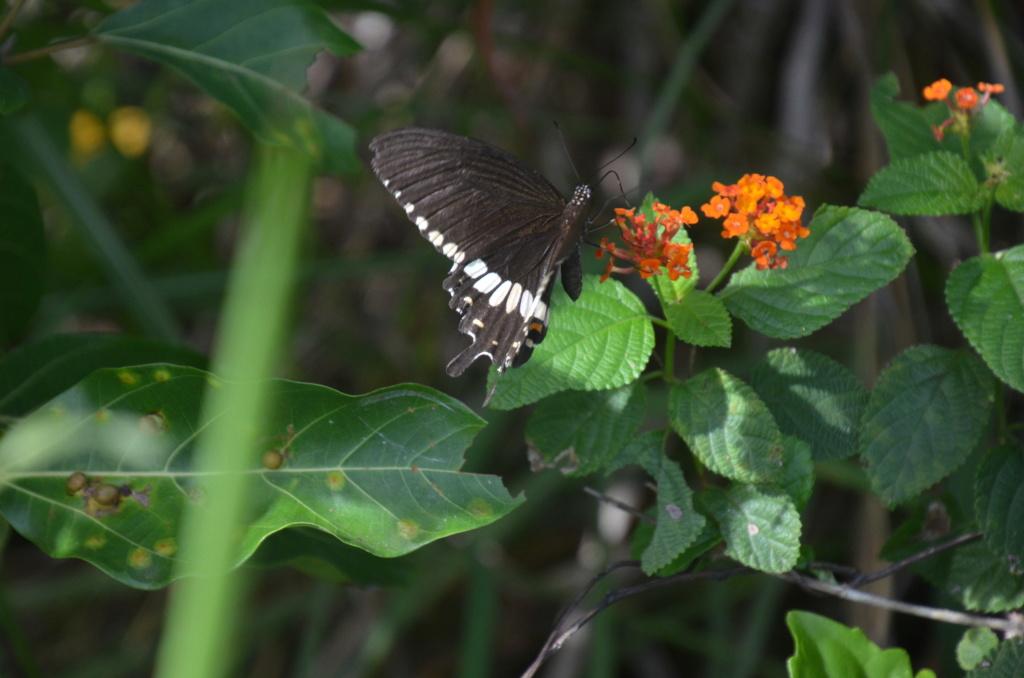 Sri Lanka Phi_4912