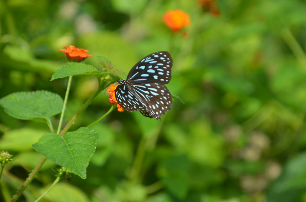 Sri Lanka Phi_4913