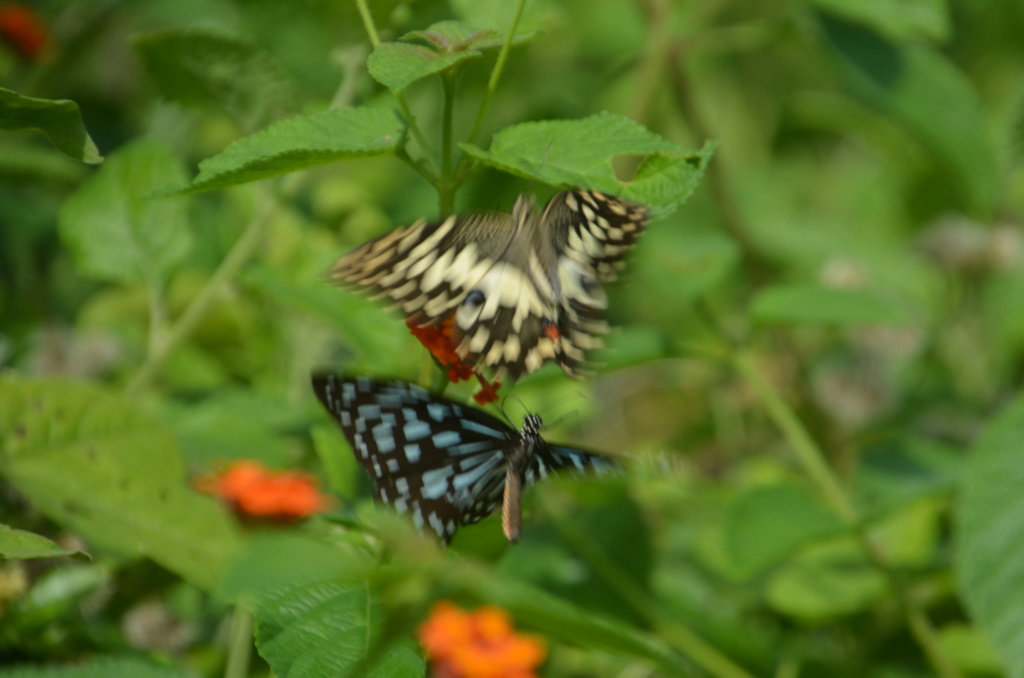 Sri Lanka Phi_5010