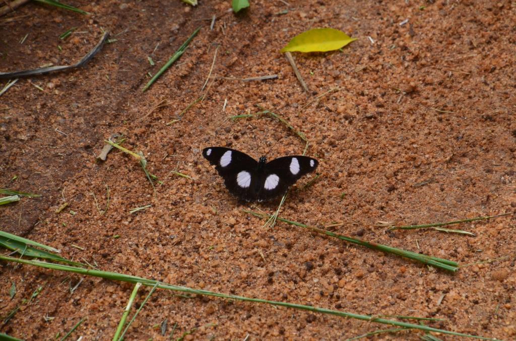 Sri Lanka Phi_5015
