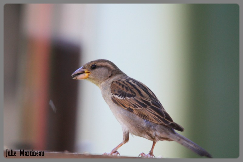 I.D. petit oiseau au drole de bec Img_9910