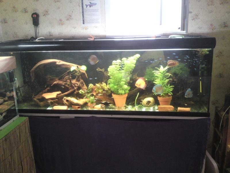 ma fishroom P04-0810