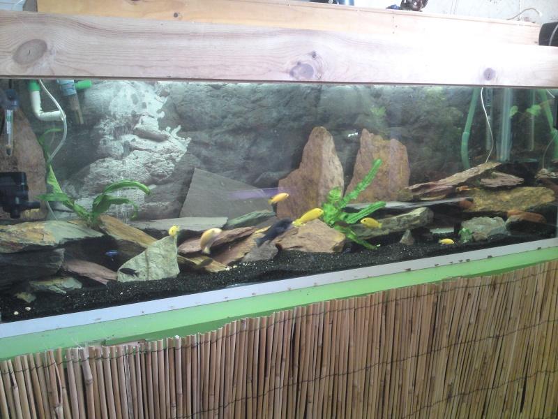 ma fishroom P05-0810