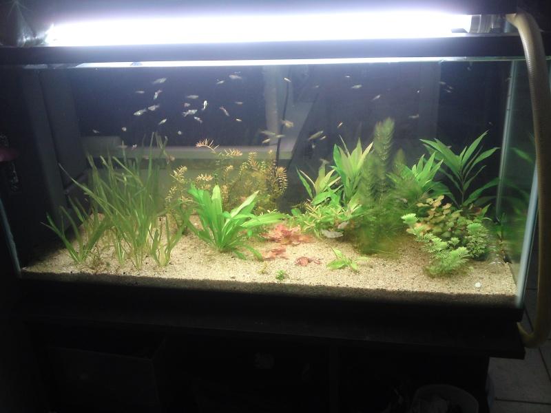 ma fishroom P06-0910