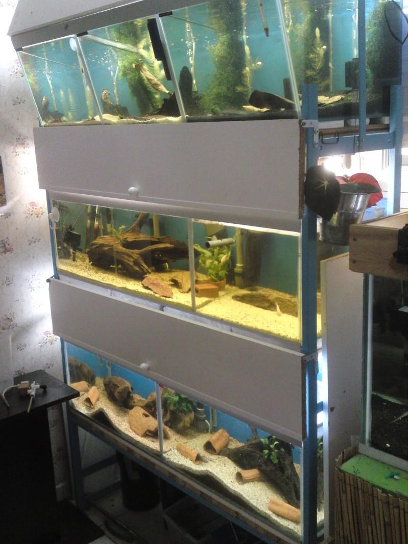 ma fishroom P06-0911