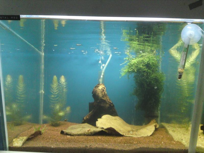 ma fishroom P06-0912