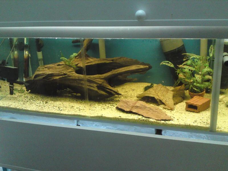 ma fishroom P06-0913