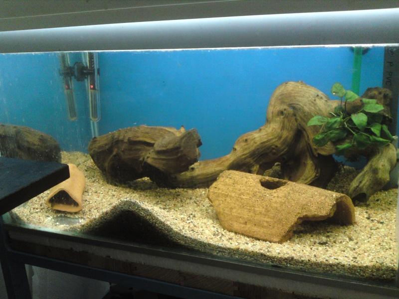ma fishroom P06-0914