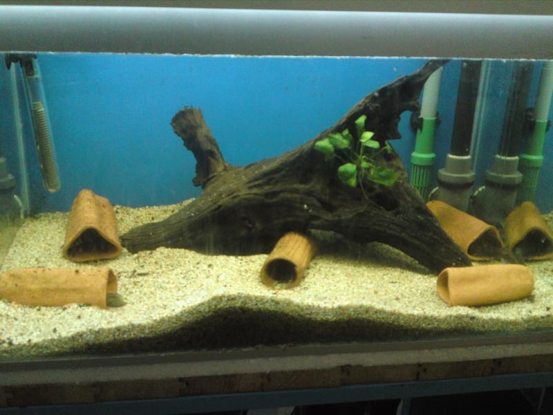 ma fishroom P06-0915