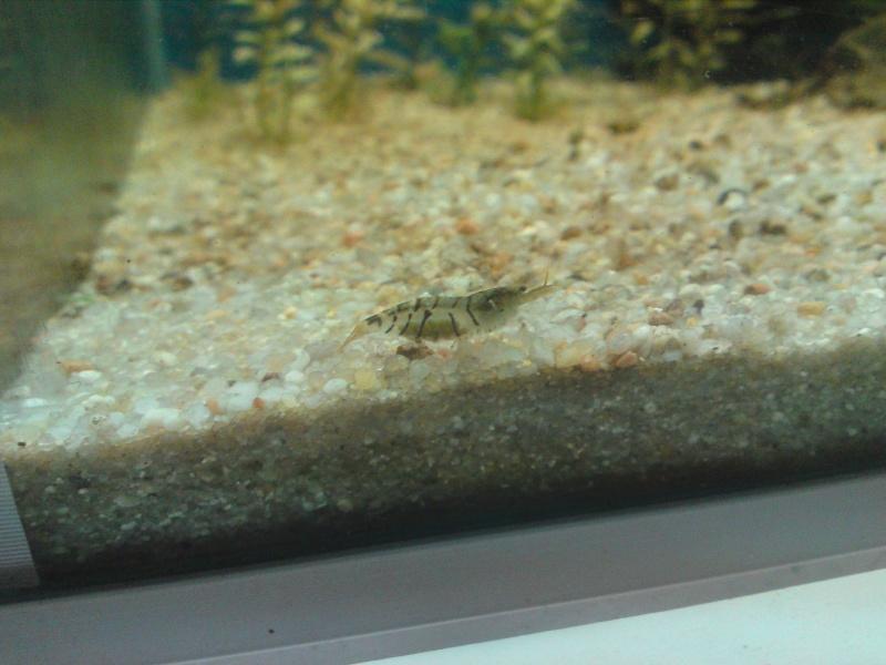 ma fishroom P18-1011