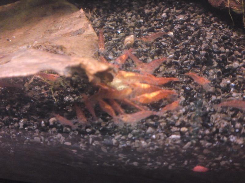ma fishroom P26-0911