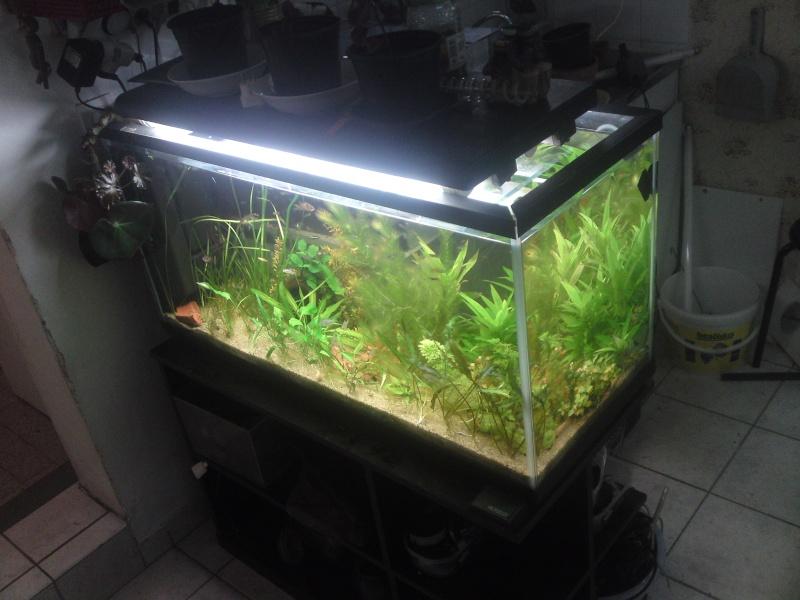 ma fishroom P26-0912