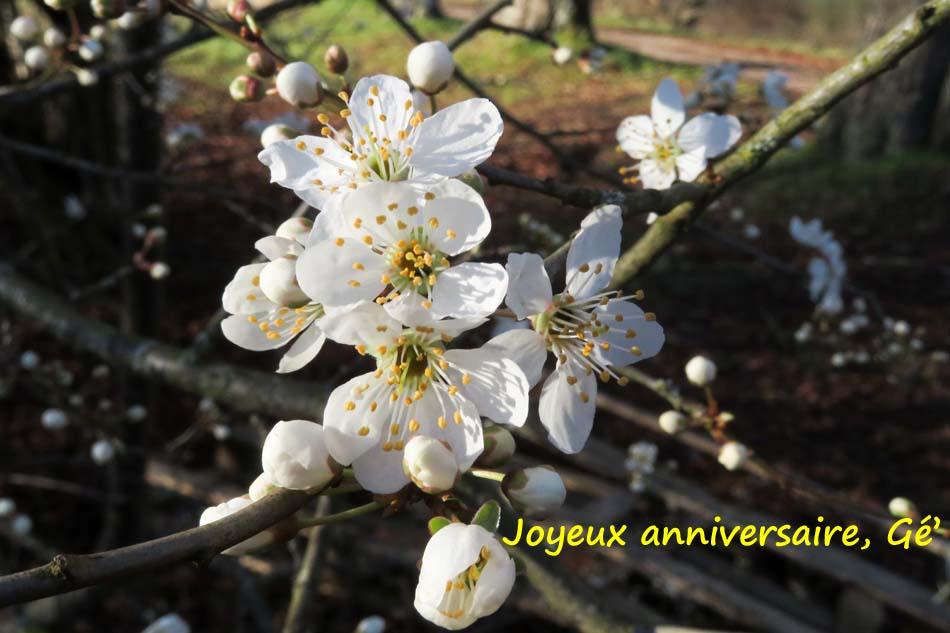 Bon anniversaire Avernes ;) Prunel10
