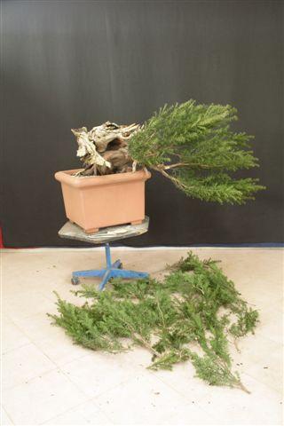 Next bonsai demo at my friend Stemberger 310