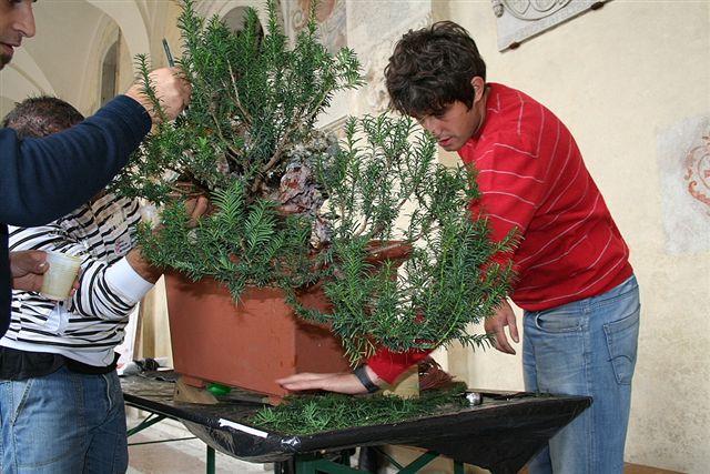 Next bonsai demo at my friend Stemberger Img_3210