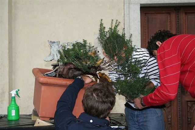 Next bonsai demo at my friend Stemberger Img_3211